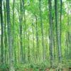 サラリーマンで疲れたら、森の匂いで癒されましょう。