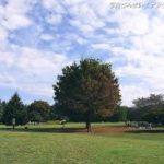 【休日の過ごし方】光が丘公園と鉄棒が素晴らしい (※28歳)