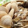 【ベトナム株】サオタ食品が今季配当発表 配当利回りは17.9%へ?