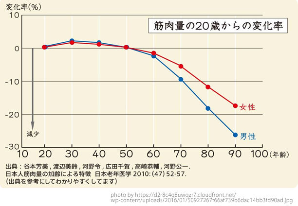 筋肉量と年齢の関係を表したグラフ